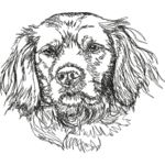 Brittany Spaniels 1 Thumbnail