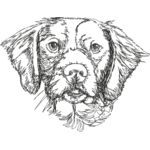 Brittany Spaniels2 Thumbnail