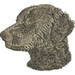 Brown Curly-Coated Retriever Thumbnail